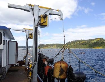 Pescante telescopico